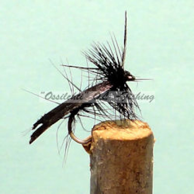 Black Sedge #8