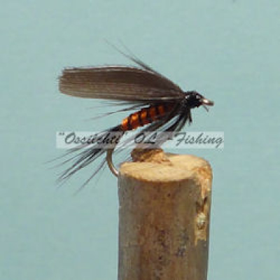 Wet Winged Fly Orange Body Dark Wings #14