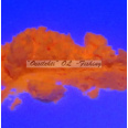 Fluorescent colour pigment for lure making ice jig making orange 10g TFH®