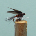 Wet Winged Fly Orange Body Dark Wings #12